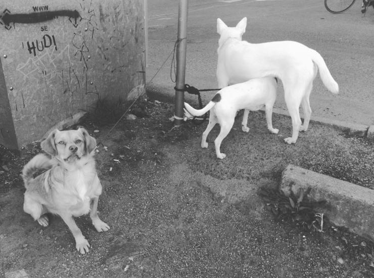 hundar utanför ica